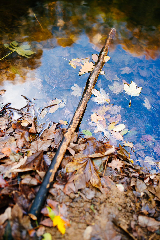 herbst bonn spaziergang dornheckensee