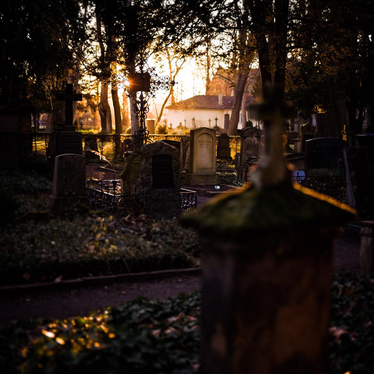 Blick gegen das Licht auf den Friedhof