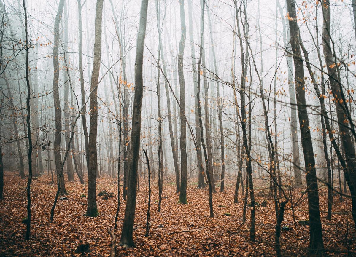 Bäume im Nebel V