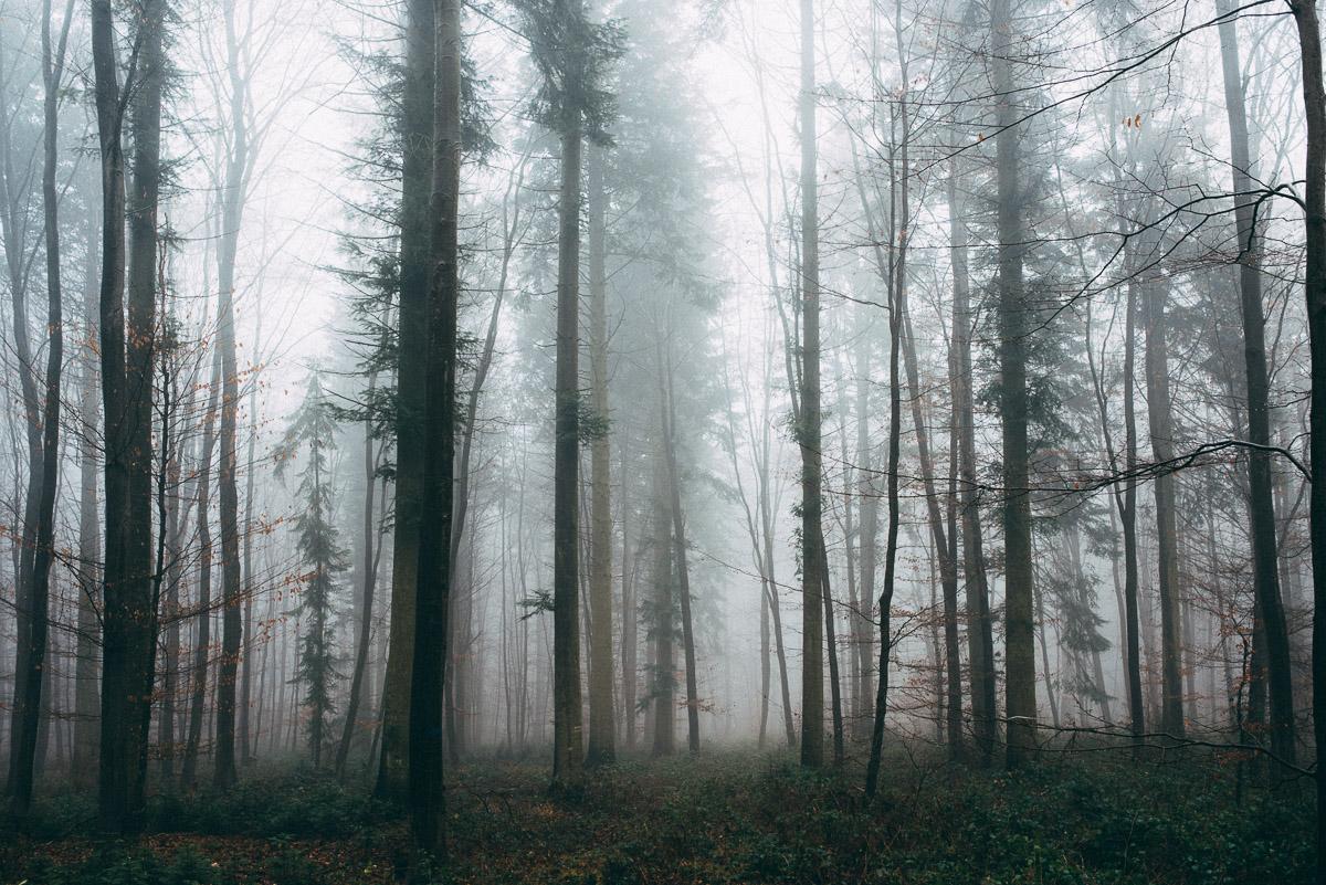 Bäume im Nebel IV