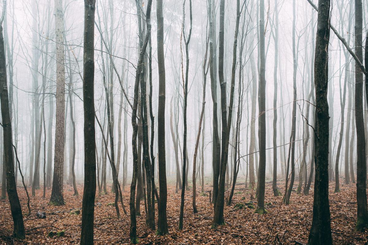 Bäume im Nebel III