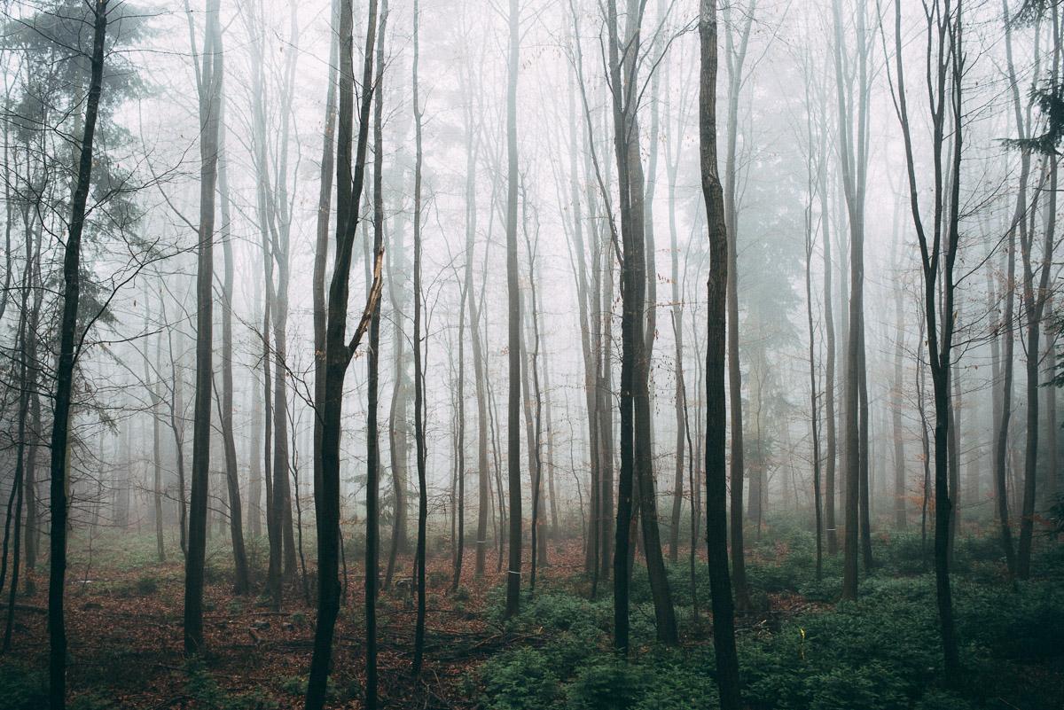 Bäume im Nebel II
