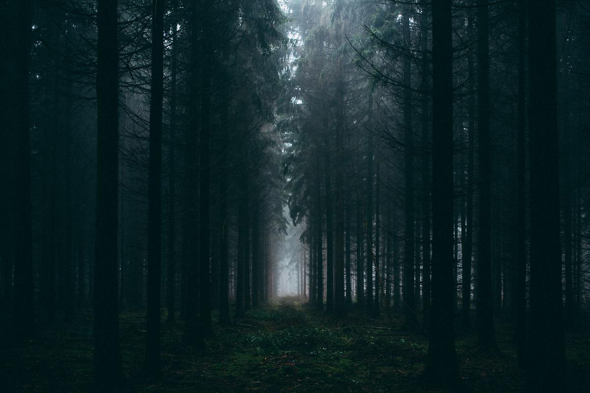 Waldpfad I