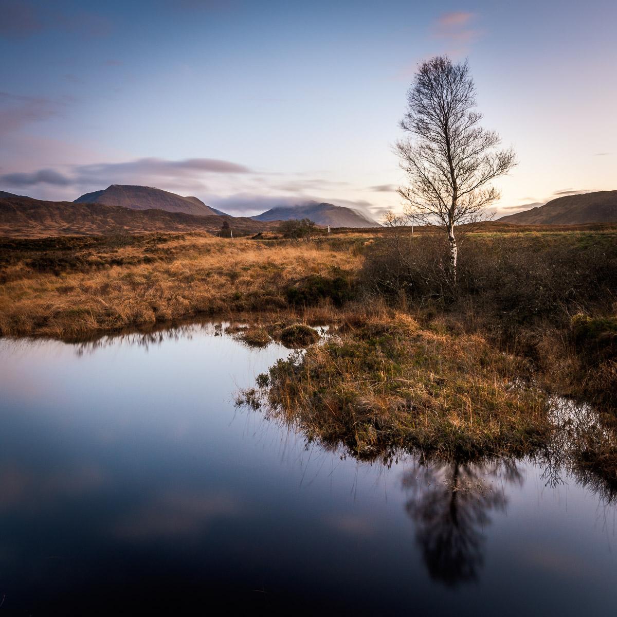 Einzelner Baum am Loch Bà