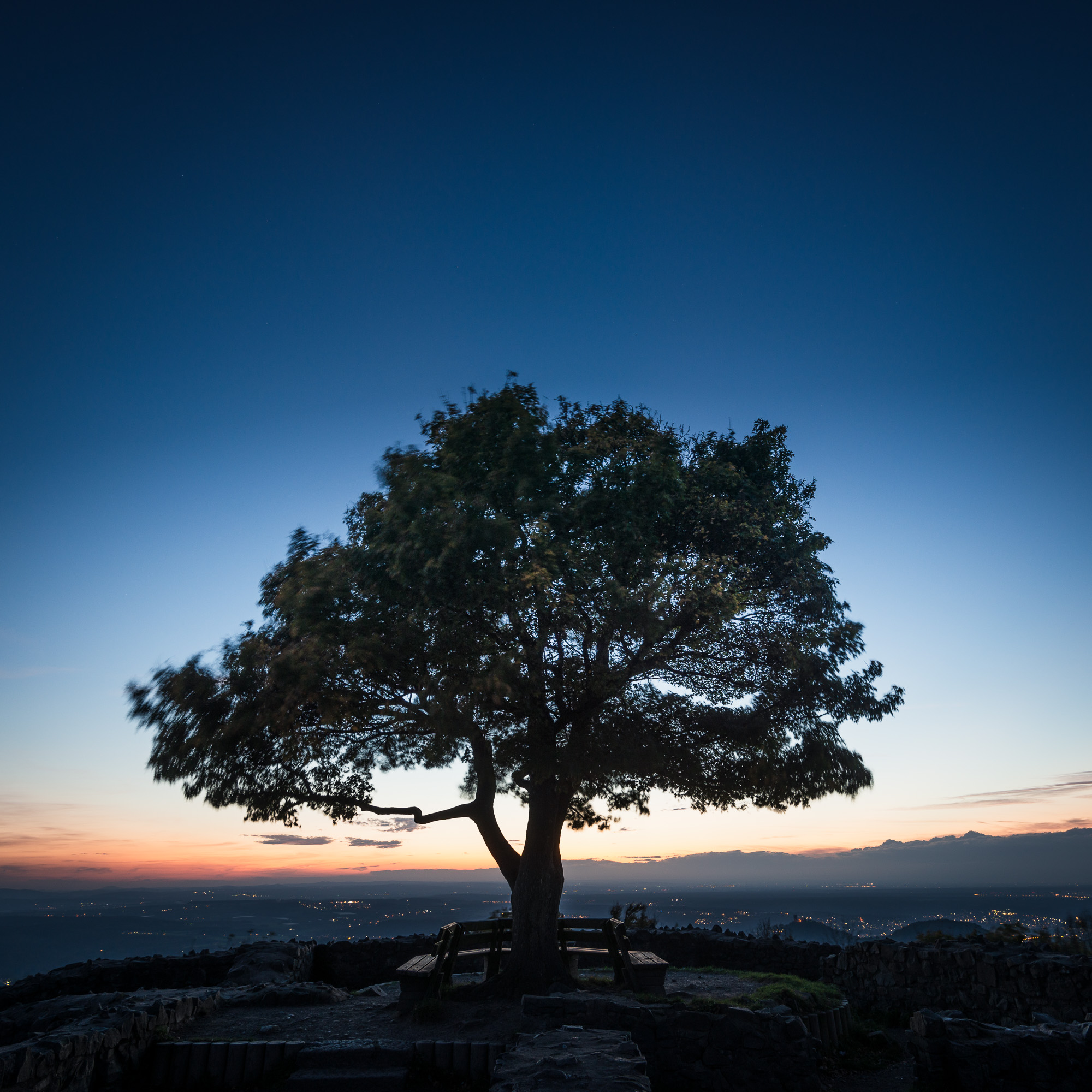Einsamer Baum an der Löwenburg